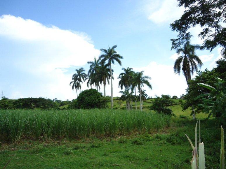 campos cubanos